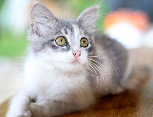 5 Ways to Keep Cat Healthy