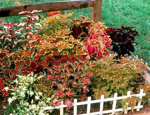 3 Ways to Save Money on Landscaping
